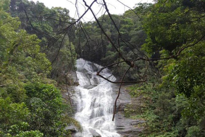 Private Tour Tijuca Forest and Botanical Garden