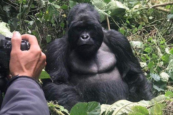 11 Day Rwanda, Congo, Uganda Gorillas and Nyiragongo Trek