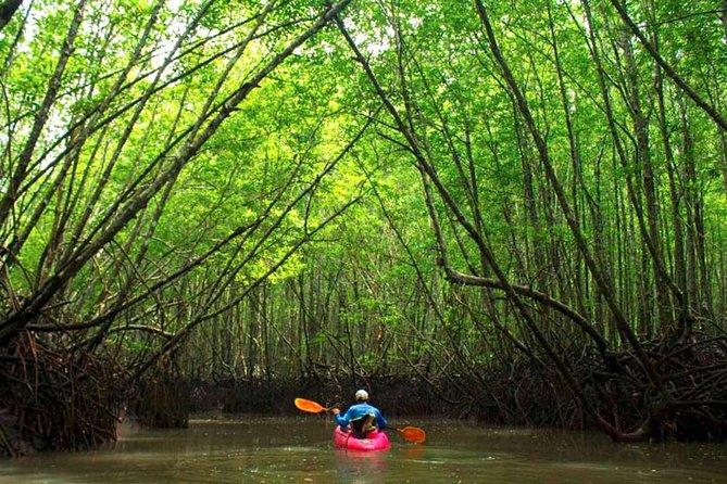 Deep mangrove and canyon Kayak Tour in Krabi