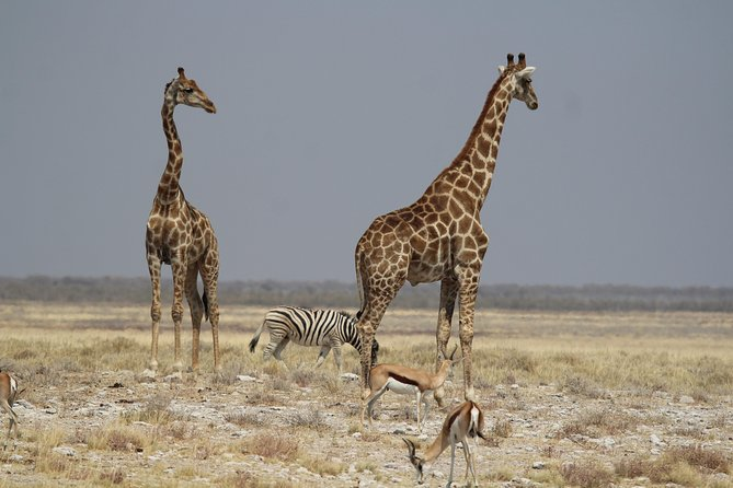 9 Day Discover Namibia Accommodated Safari