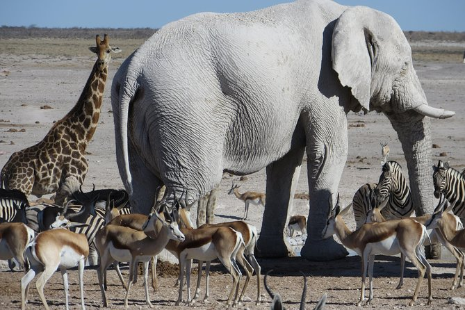 Etosha National Park Safari - 3 Days