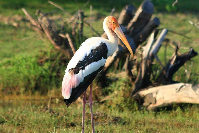 Half Day Safari in Bundala National Park from Hambantota Harbor