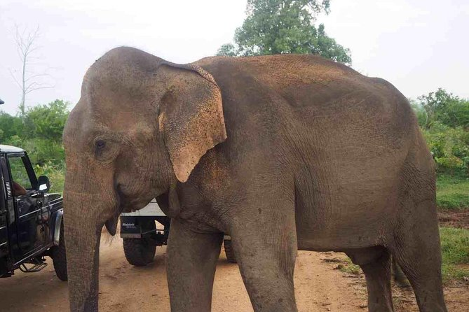 Elephant Transit Home Udawalawe with Jeep safari - All included Tour