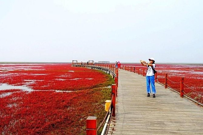 All-Inclusive Private Day Tour to Red Beach in Panjin City from Shenyang