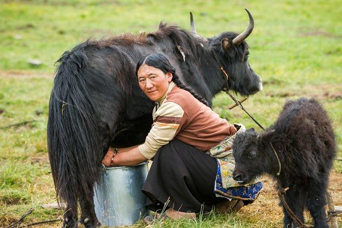 5-Days Tours: Tibetan Nomadic Life Experiences