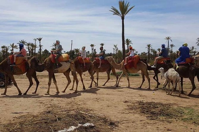 Quad & Camel Ride