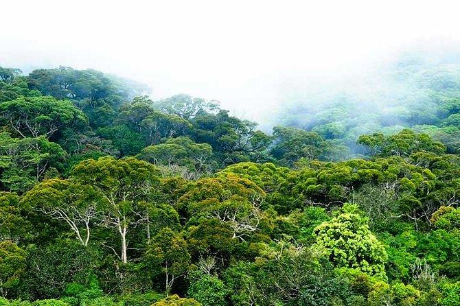 Sinharaja Rain forest Day Tour