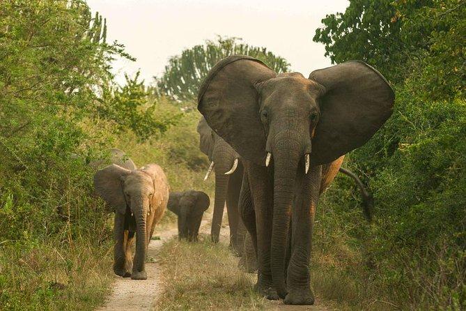 3 Day Queen Elizabeth NP Safari