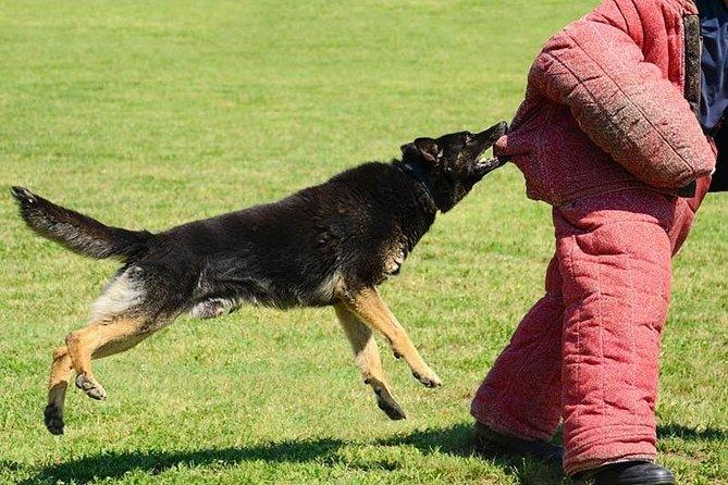Riga Dog Attack Prank