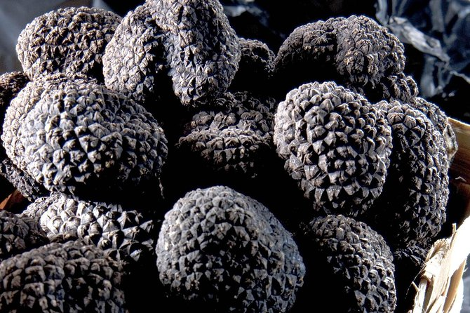 Truffle tour in Alba, Italy, from Cote d'Azur