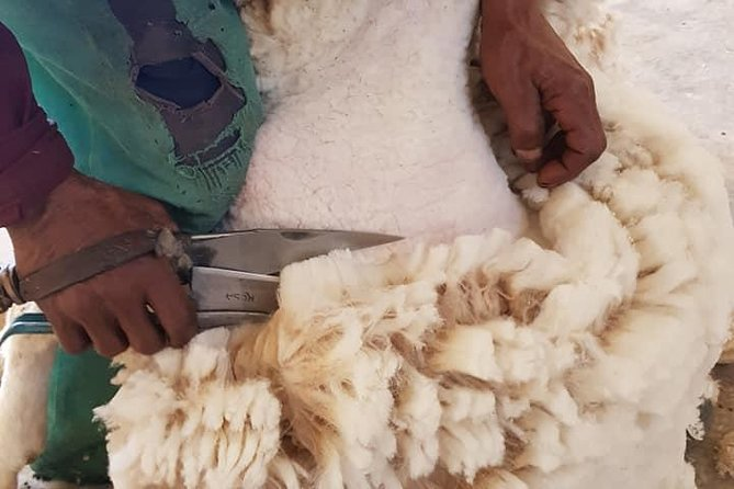 Sheep farm experience