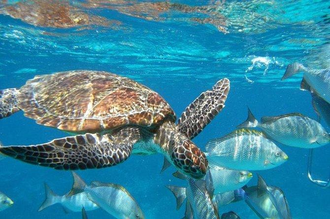 Surin Islands Snorkeling Trip from Khao Lak