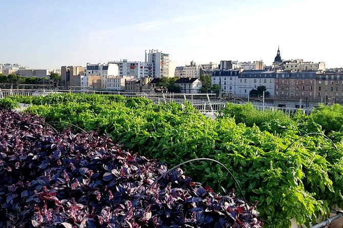 Getaway on the Parisian rooftops to discover an urban farm