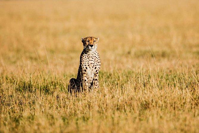 5-Day Tanzania Cheetah Classic Safari