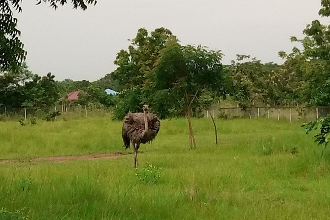 Half-day Accra Safari Tour photo 6