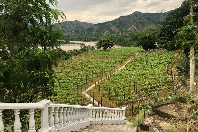 Unique Mediterranean Wine-tasting VIP Tour from Medellin