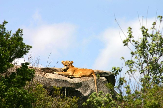 3-Day Wildlife Wonders of Ngorongoro -Tanzania photo 6