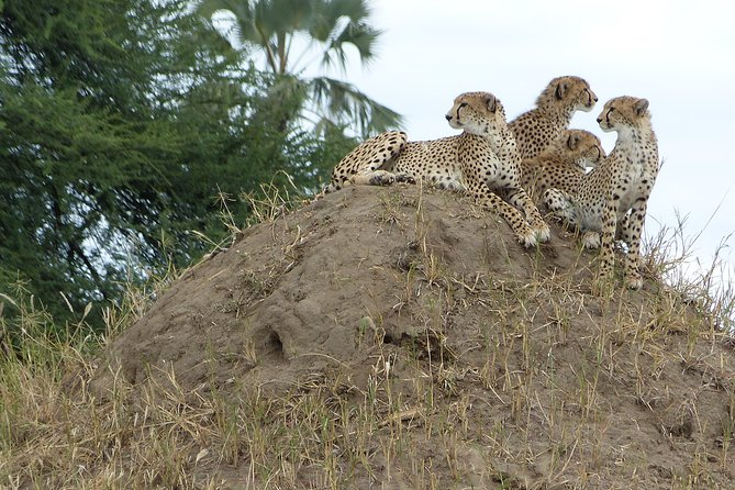 3-Day Wildlife Wonders of Ngorongoro -Tanzania photo 3
