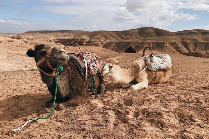 Desert Agafay and Atlas Mountains Waterfall & Camel ride Day Trip From Marrakech