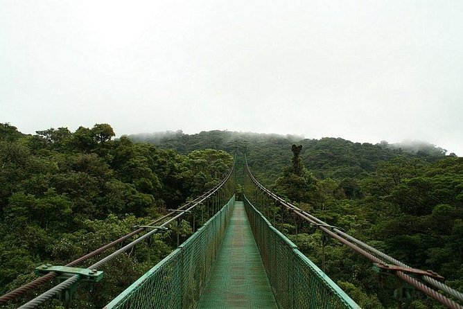 Hanging bridges and Zip line from Port Cardera especially for cruises