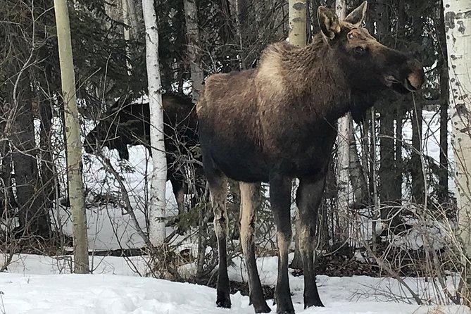 Winter - Anchorage All Around City Tour