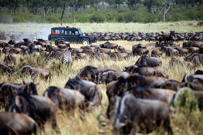 10 Days Kenya Tanzania Budget Safari