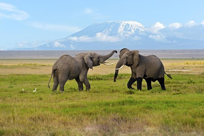 3 Days Amboseli Safari photo 1