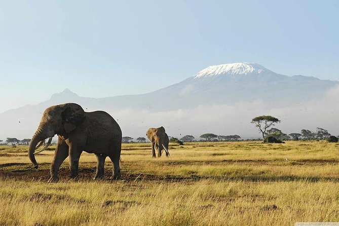3 Days Amboseli Safari photo 3