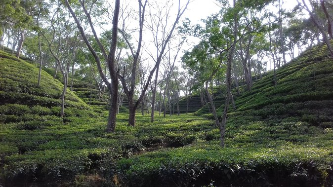 4 days Dhaka to Sylhet & Srimangal