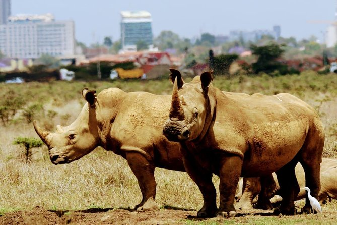 Half Day Nairobi National Park Guided Tour photo 5