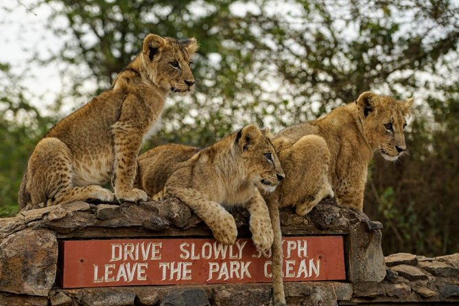 Half Day Nairobi National Park Guided Tour photo 4