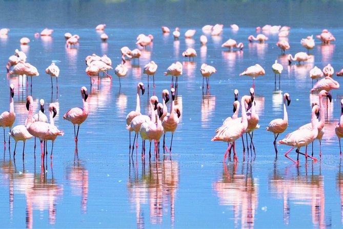 Lake Nakuru National Park to Masai Mara Game Reserve Safari