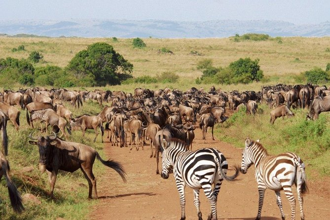 6 Days Serengeti Wildebeest Migration Holiday Safari Tours 2020 photo 1