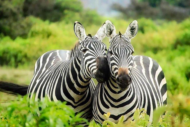 8 days Kenya Lodge Safari Package.