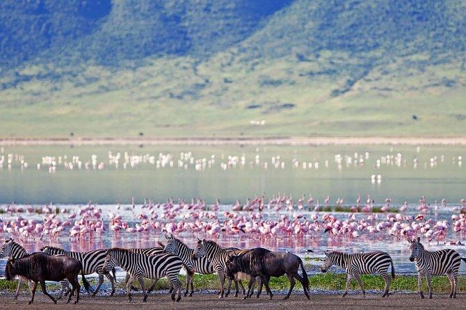Ngorongoro Crater -Best safari