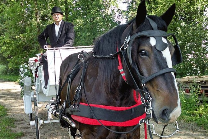Mississippi Grand Carriage Ride (60 minutes) photo 2