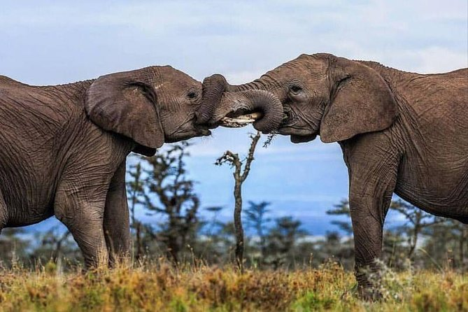 2 Days Awe-Inspiring Safari in Maasai Mara National Reserve, Kenya