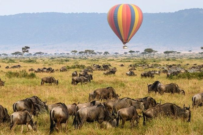 6 Days Serengeti Wildebeest Migration Holiday Safari Tours 2020 photo 6