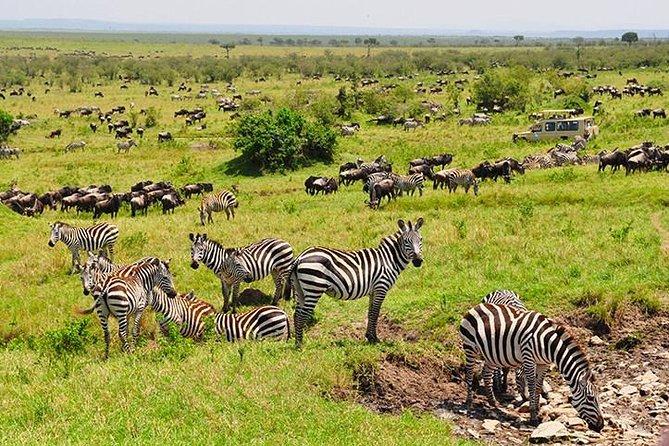8 Days Kenya Camping Holiday Adventure