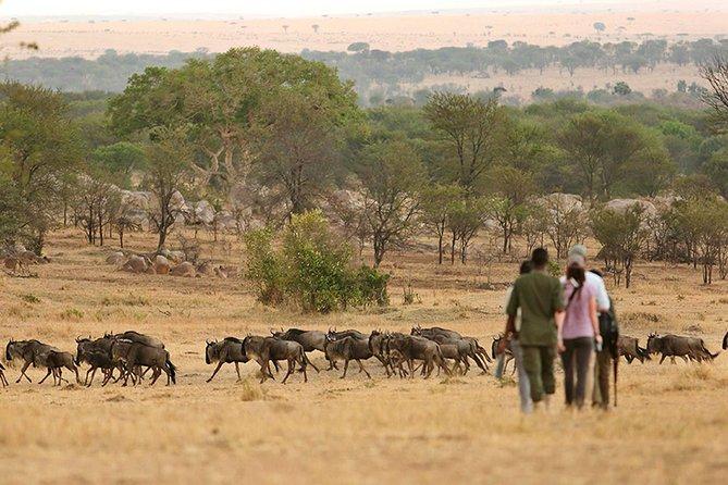 7 Days Tanzania Walking Safari