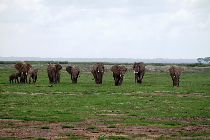Amboseli Game drive and overnight at the foots of Mt.Kilimanjaro. photo 6