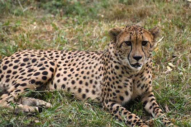 4 Days Kenya Great Safari To Great Maasai Mara Game Reserve Only.
