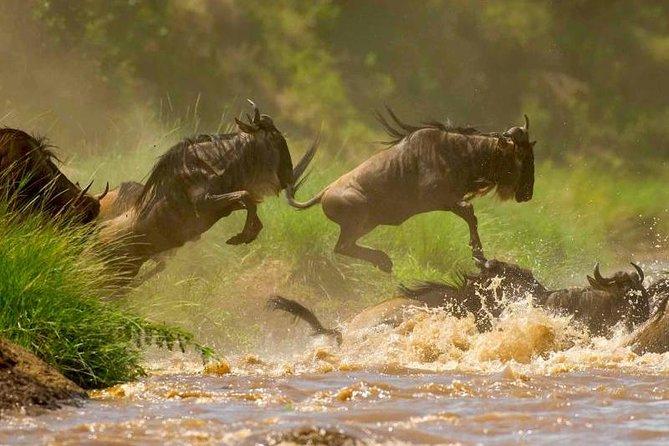 8 Days Kenya Holiday Camping Safaris