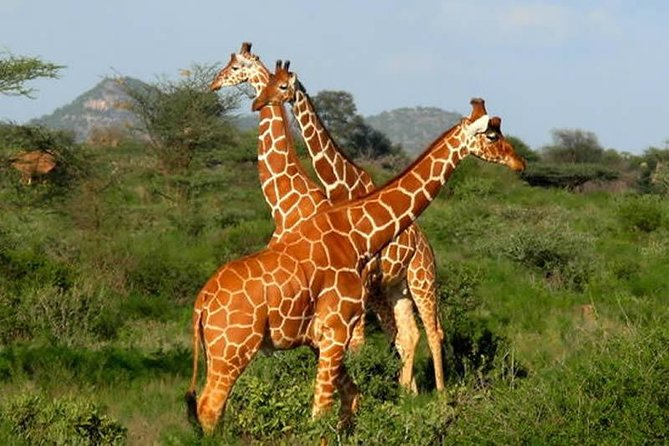 10 Days Kenya Camping Safaris Holiday Adventure photo 9