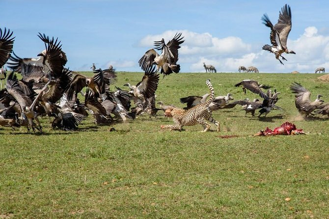 10 Days Kenya Camping Safaris Holiday Adventure photo 6