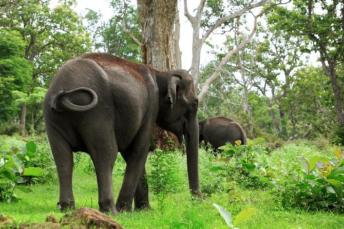Wildlife Sanctuary and Sightseeing in Wayanad - A Guided Private Tour