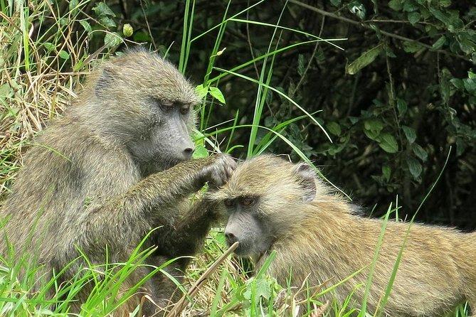 Arusha National Park one day wildlife safari