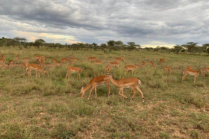 5 Days Safari Tarangire, Serengeti, Ngorongoro Crater and Lake Manyara