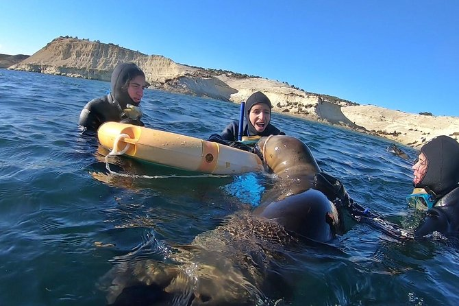 Snorkeling with Sea Lions by Madryn Buceo