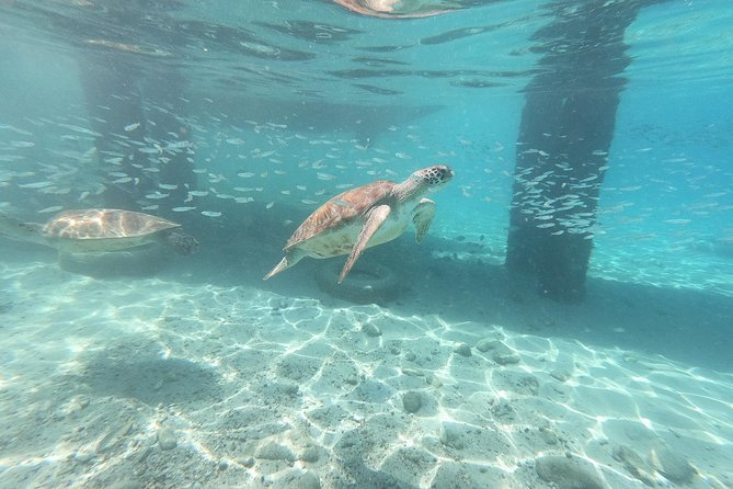 Private Custom Island Tour - Best way to get to know Curacao! photo 3